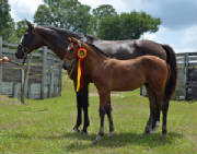 2012Foals/1-Maddie-BWP-72-fixed.jpg