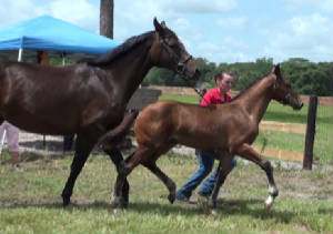 2012Foals/Maddie-at-BWP_FF_2_edited-2.jpg