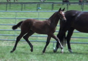 2012Foals/Maddie-at-BWP_FF_3_edited-2.jpg