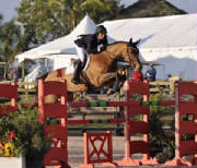 Mares/lola_red_oxer_edited-1.jpg